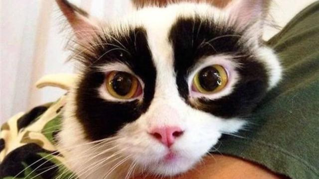 Os 35 gatos com os pelos mais diferentes do mundo