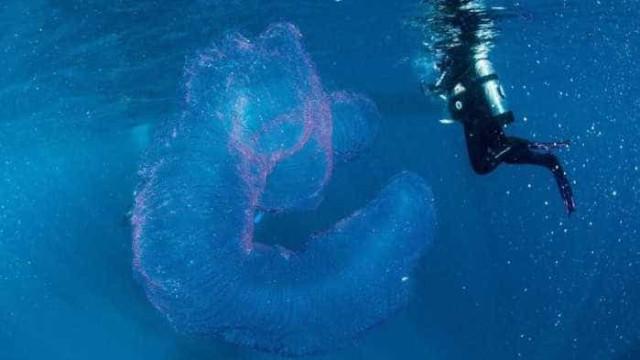 Mergulhadores encontram criatura misteriosa na Austrália