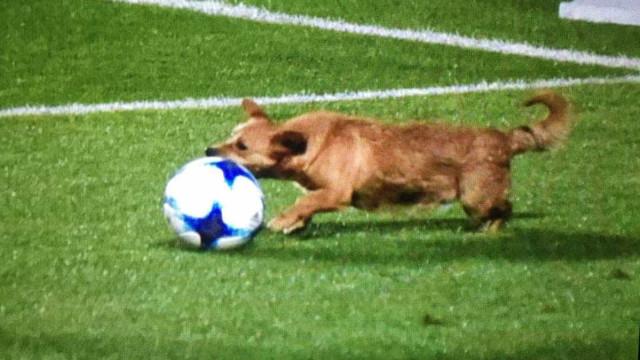 Cadela invade campo e corre atrás da bola durante jogo na Argentina