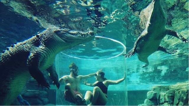 Visitantes ficam cara-a-cara com crocodilos gigantes na Austrália