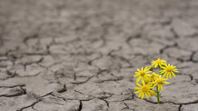 Saiba como amenizar os efeitos do clima seco
