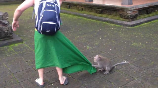 Macaco ataca turista na ilha de Ubud, em Bali