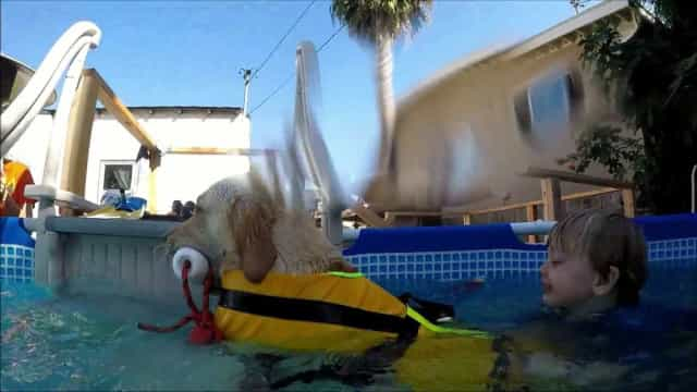 Menino autista perde medo de água com ajuda de um cão