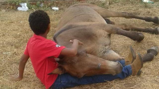 Machucado, burro é abandonado pelo dono e comove criança no TO