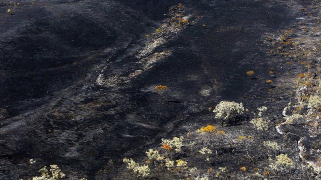 Regeneração da fauna e flora da Chapada dos Veadeiros vai levar 10 anos