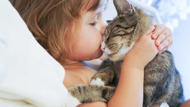 Gatos podem ajudar a 'frear' asma nas crianças