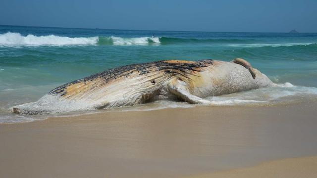 Rio vai transformar carcaça de baleia encalhada em energia limpa