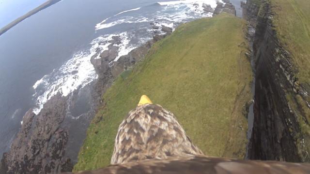 Vídeo mostra a visão de uma águia sobre as falésias da Escócia