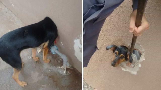 Cachorra com cabeça presa em cano é salva por bombeiros em SP