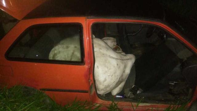 Suspeitos colocam boi dentro de carro após furtarem animal em SC