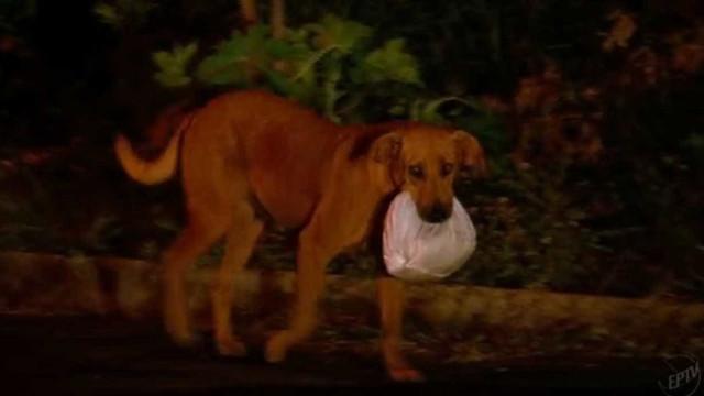 Cadela que levava marmita para animais morre após ser picada por cobra