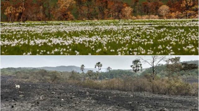 Após incêndio, flores voltam a nascer na Chapada dos Veadeiros