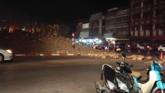 Milhares de macacos invadem ruas na Tailândia