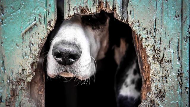 Menino fica escondido em casa de cachorro e se salva em tiroteio