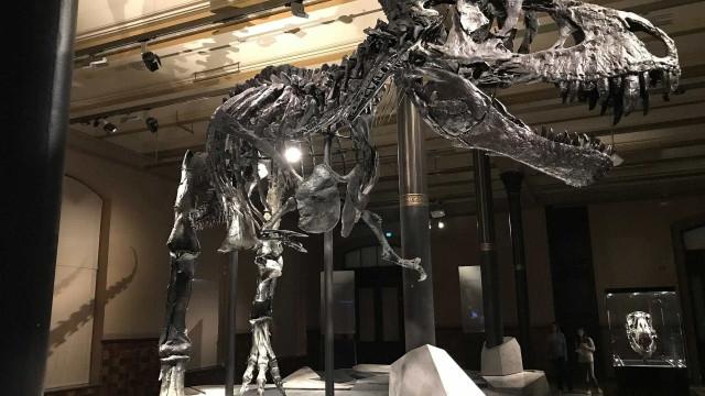 Carrapatos já incomodavam os dinossauros há 100 mi de anos, diz estudo