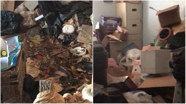 70 gatos são resgatados de casa abandonada