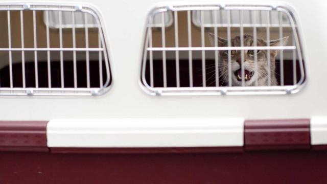 Viagens de pets para a Europa estão travadas sem previsão de retorno