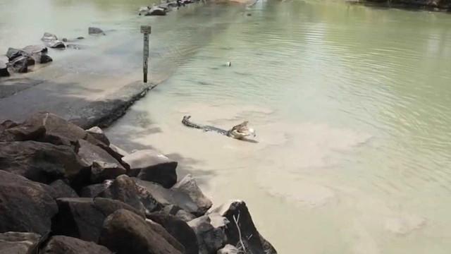 Pescador e crocodilo travam duelo por peixe em rio da Austrália