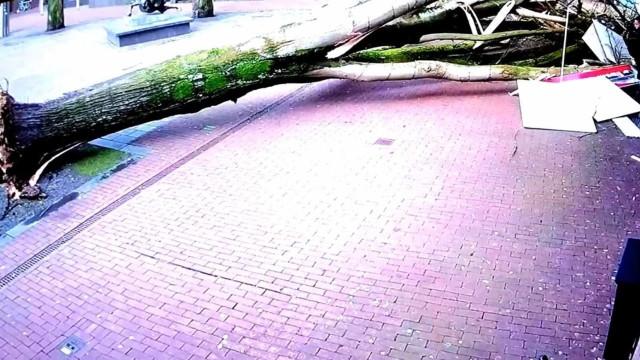 Árvore cai na Holanda e mulher com bebê escapa por centímetros