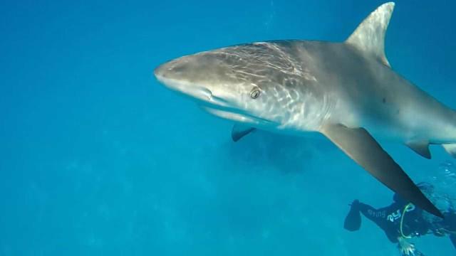 Mergulhador acerta tapa em tubarão no Caribe