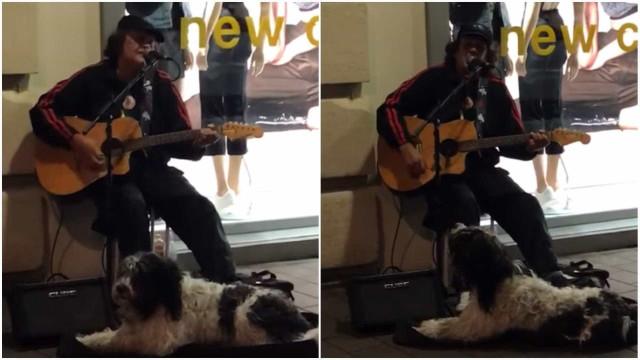 Cão e músico de rua fazem dueto adorável na Nova Zelândia