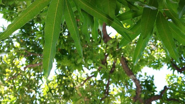 Mãe é detida após amarrar filho em árvore: 'Dá muito trabalho'