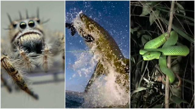 Ranking: os animais mais perigosos do mundo