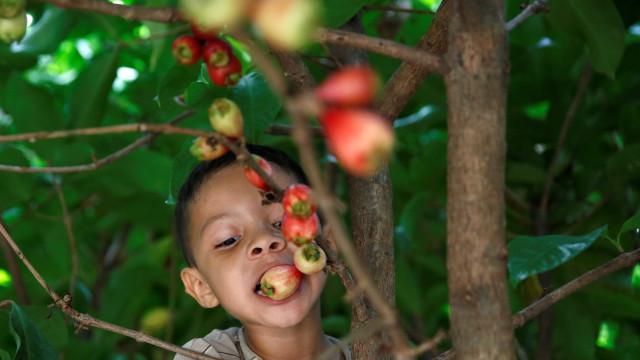 Desnutrição atinge até 70% das crianças na Venezuela