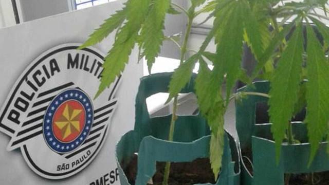 Pacientes são detidos por cultivo de maconha em quarto de hospital