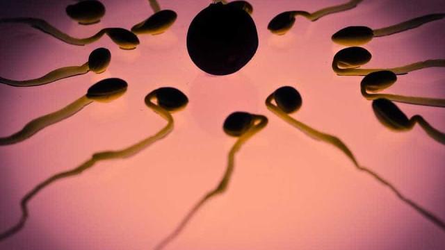 Saiba quais são as chances de engravidar em cada idade