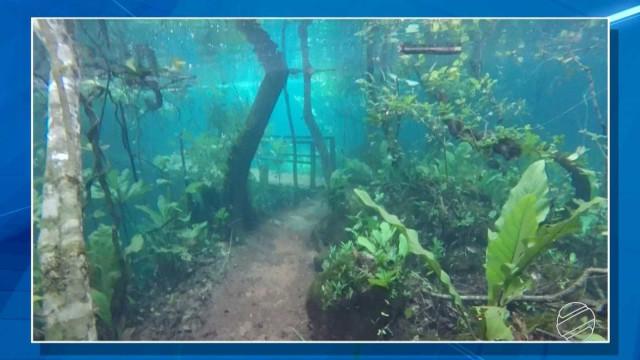 Trilhafica submersa após cheia do rio da Prata perto de Bonito