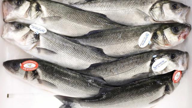 Quaresma e Semana Santa impulsionam consumo de pescados em até 15%