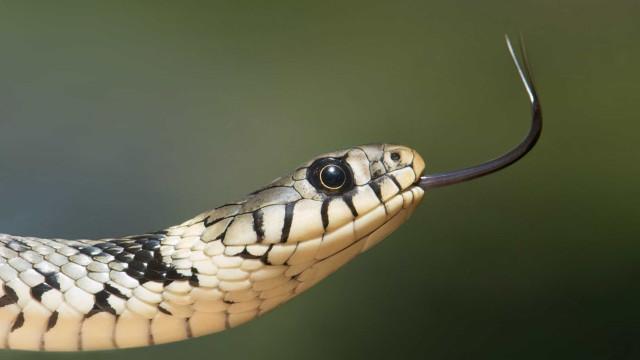 Dançarina é encontrada morta com duas cobras em quarto de boate em SP