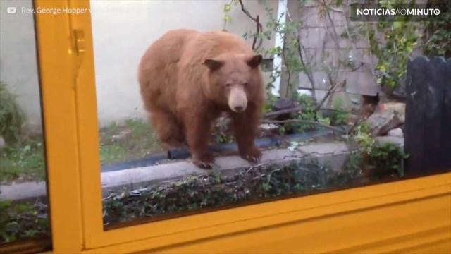 Ursos invadem quintal de família nos EUA