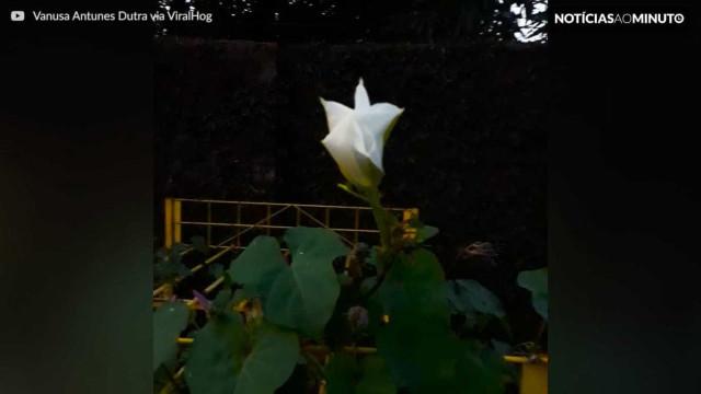 Morador do Tocantins filma o desabrochar de uma flor