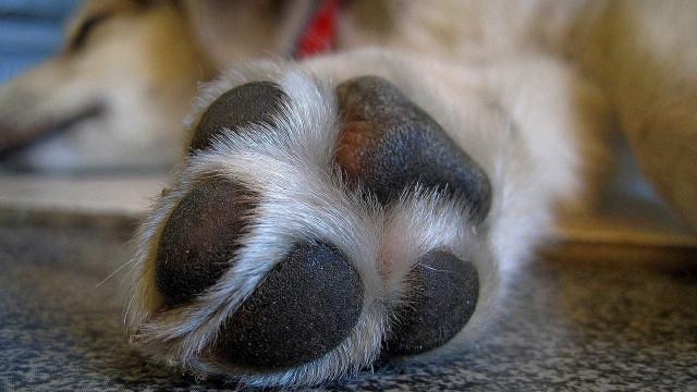 Suspeito de enterrar cão vivo depõe, e inquérito segue para Justiça