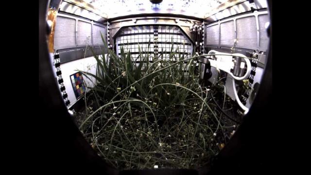 Inédito: astronautas conseguem cultivar plantas no espaço