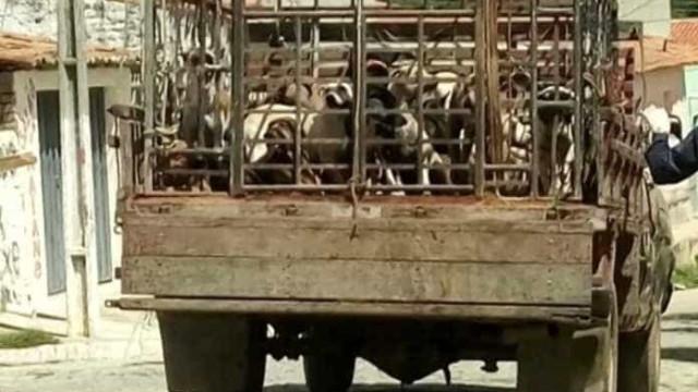 Secretários são denunciados após matança de cães na Paraíba