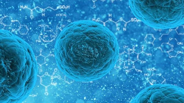 Cientistas criam embrião de rato a partir de células-tronco