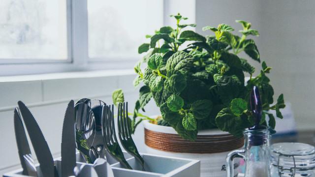 Da culinária à saúde: conheça os benefícios da hortelã