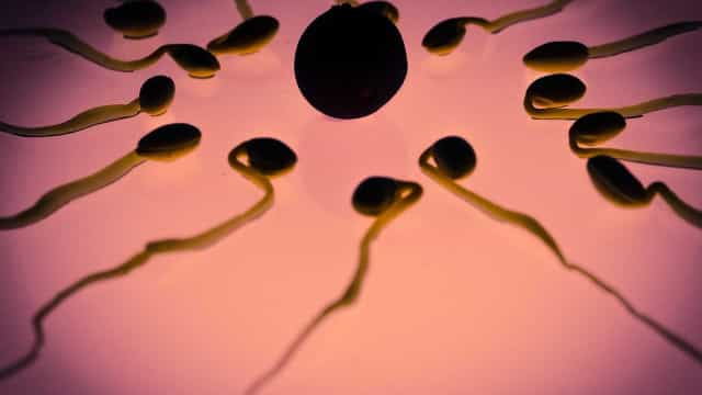 Mudança em regra de reprodução assistida faz surgir 'Tinder dos óvulos'