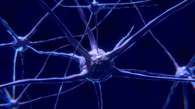 'Transplante de memória' entre caracóis mostra resultado promissor