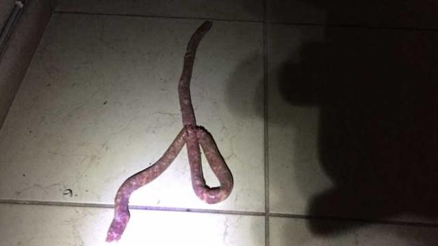 Mulher confunde linguiça com cobra e pede ajuda aos bombeiros em MG