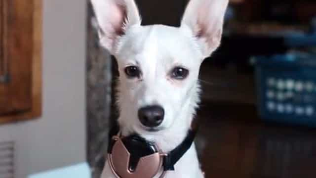 Projeto quer dar ao seu cachorrinho um smartphone; entenda