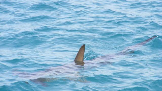 Homem sobrevive a ataque de tubarão em praia de nudismo na Austrália