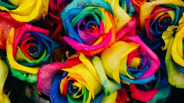Qual cor usar? Descubra pelo mês do seu nascimento