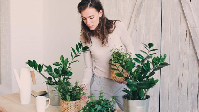 Conheça dez plantas ideais para cultivar dentro de casa