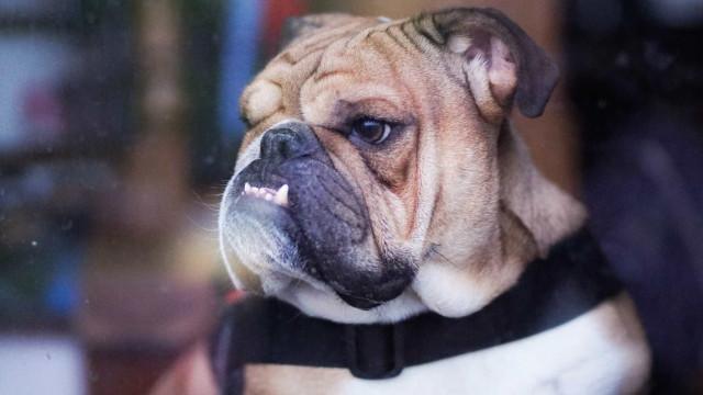 Homem que filmou a si próprio matar um cão com enxada é investigado