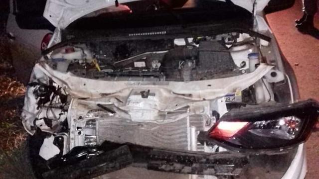 Motorista não consegue desviar e mata anta em rodovia de MT