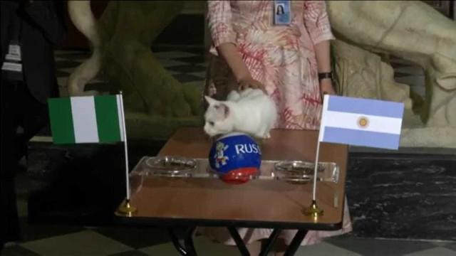 Gato vidente prevê resultado de Argentina x Nigéria